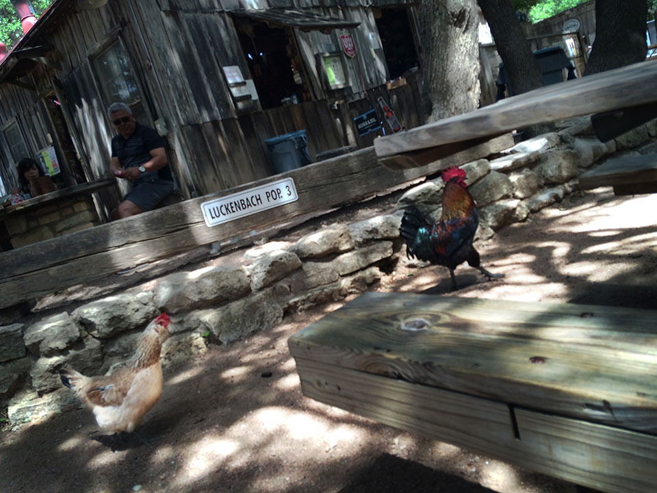 Chickens, yes, chickens. Luckenbach, Tx.