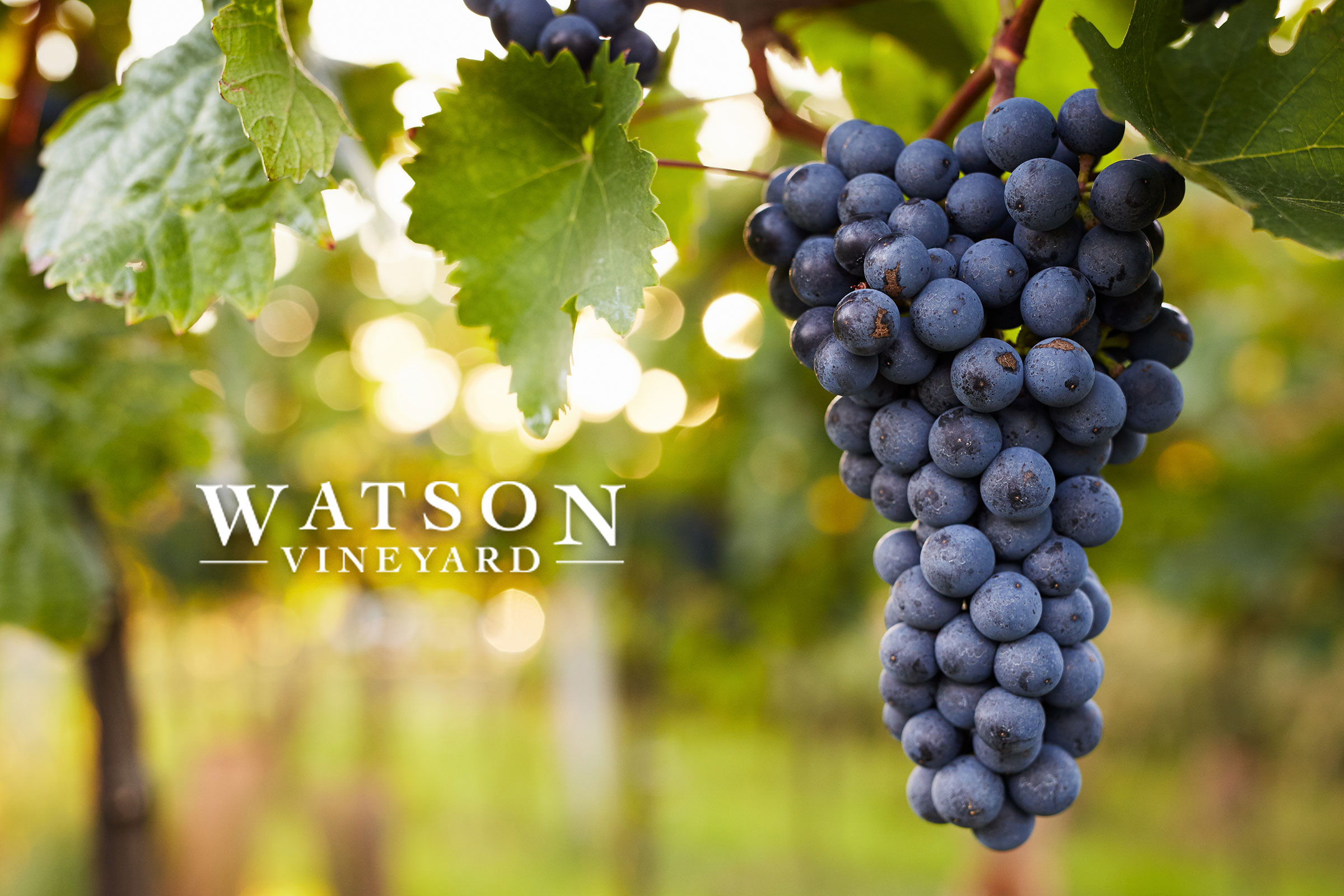 Located in Coleman, Texas, we began developing our vineyard in January of 2011, marking the beginning of our life-long love of growing grapes and producing quality and enjoyable wine for all our fans and future customers!